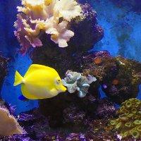 А вы думали ,что золотая рыбка в старости красивая? :: A. SMIRNOV