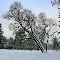 Зимний сон :: Genych