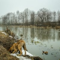 Мышиная охота :: Yuri Silin