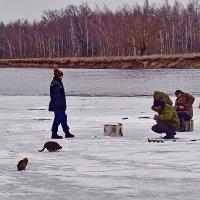 И  котам  рыбакам  будет  улов. :: Валера39 Василевский.