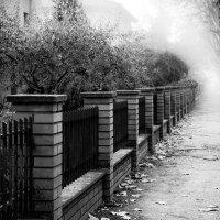 по области туман... :: Георгий Муравьев