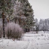 22 февраля :: Андрей Дворников
