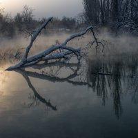 Утро :: Александр Плеханов