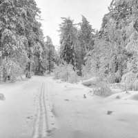Заснеженный лес :: vladimir