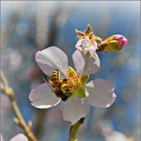 Весна пришла.... :: Юрий Владимирович
