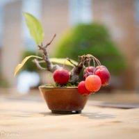 Райские яблочки :: Астарта Драгнил
