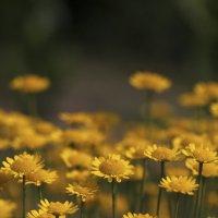 Желтое настроение :: Олег Наумов