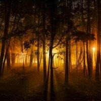 Сказочный лес. :: ALEXANDR L