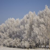 Снежная аллея. Зима еще в своём праве. :: Елена Сохарева