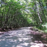 Коридор в лесу :: Виктор Шандыбин