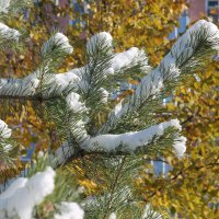 первый снег :: Николай Буклинский