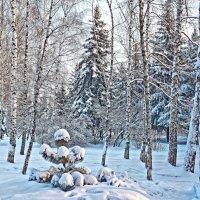 В лесу родилась елочка... :: Евгений Кузнецов