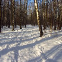 Почти март! :: Андрей Лукьянов