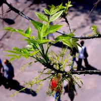майская зелень :: Александр Прокудин