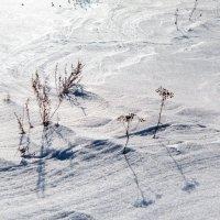 Снежная пустыня :: Эльвира Сагдиева