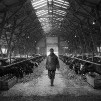 Сельская жизнь :: Елена Ерошевич