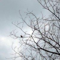 одинокая птичка :: tgtyjdrf