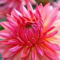 Цветы – это мысли природы о любви... :: Mari Kush