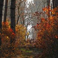 Осень :: Станислав Любимов