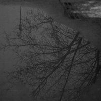 Отражение зимы :: Gonchar N