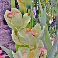 Орхидеи :: Irine kolesova