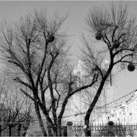 Зимние фрукты :: Volkov Igor