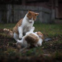 """"""" Выяснение отношений"""" :: Игорь Сорокин"""