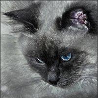 Кузьма Львович штиписьняются! -«Кошки очарование мое!» :: Shmual Hava Retro