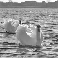 Черно-белое. :: Paparazzi