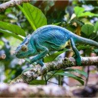 Такой разнообразный Мадагаскар! :: Александр Вивчарик