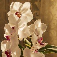 Орхидея :: Андрей