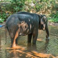 У слона банный день :: Виктор Куприянов