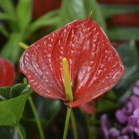 Однажды в магазине цветов :: Ефим Хашкес