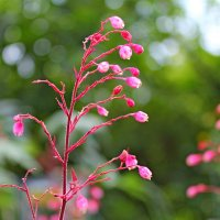 Цветы — стихи природы... :: Mari Kush