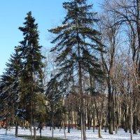Стражи на аллее парка... :: Тамара (st.tamara)