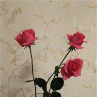 Розы от любимого :: Svetlana27