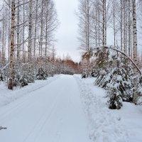 Финские проселочные дороги :: Евгений Никифоров