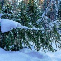 Под тяжестью снега :: Анатолий Иргл