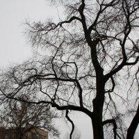 Я такое дерево... :: Валерия  Полещикова