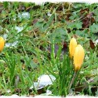 В предчувствии весны :: Nina Yudicheva