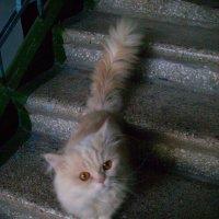 Розовый кот :: Галина Дашевская