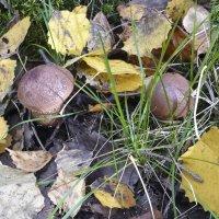 В осеннем лесу :: Aнна Зарубина