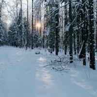 Зимнее утро. :: Валерий Молоток