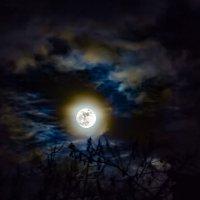Ночь. Луна. :: Александр Кореньков