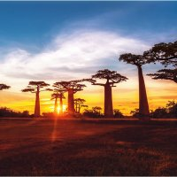 Быстротечный закат в долине баобабов!(Мадагаскар)... :: Александр Вивчарик