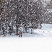 People, snowstorm, trees. :: Илья В.