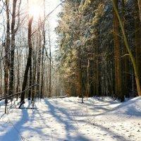 В лесу ещё зима :: Милешкин Владимир Алексеевич