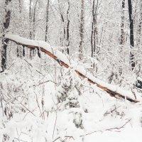 Зимний лес :: Леонид Туваев