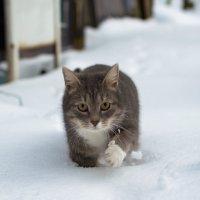 Кот-снегоход :: Dirty Priest