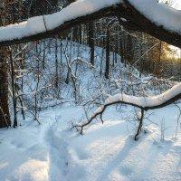 Тропинка в зимнем лесу. :: Vadim Piottukh